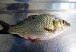 Выявили массовое заражение рыбы в Ростовской области