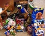 В Ростове молодожены попросили дарить им корм для животных вместо цветов