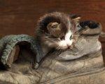 Ростовчане смогут выбрать себе питомца на фотовыставке бездомных животных