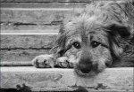 Отлов бездомных животных проведут в Белой Калитве
