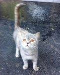 Ростовчане выкинули кошку на улицу после ремонта в квартире