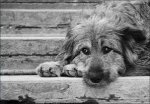 В Белой Калитве проведут отлов бездомных животных