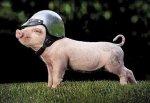 Свиней в Ростовской области стало больше на 6,5%
