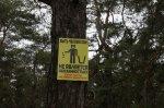 Сосновый бор в районе детского лагеря «Орленок» становится лучше и чище