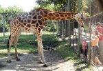 Ростовский зоопарк увеличил в 2 раза плату за вход