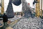 В донском регионе изъято 600 килограммов опасной для здоровья рыбы