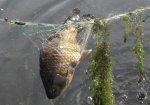 Любителям весенней рыбалки с использованием запрещенных орудий лова