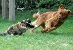 Бешеная кошка накинулась на пса и своего хозяина