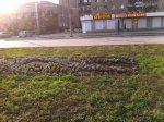 Газоны, клумбы, деревья в парках Белой Калитвы – кто за ними ухаживает
