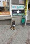 Ростовчан возмутила фотография пса-попрошайки
