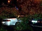 В Ростове упавшее дерево придавило два автомобиля
