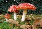 В г. Шахты 11 человек отравились грибами, трое в реанимации