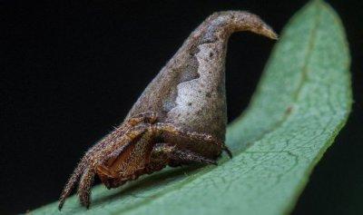 Новый вид паука был назван в честь персонажа книг о Гарри Поттере