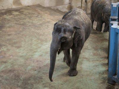В ростовском зоопарке празднуют день рождения слонихи Ситары