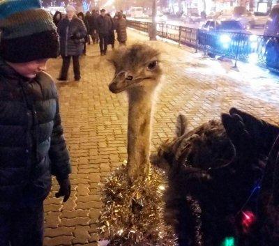Страус в новогодней мишуре в центре Ростова всех удивил