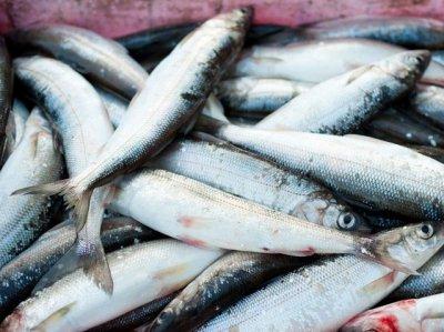 29 кг свежемороженой рыбы не пропустили в Украину