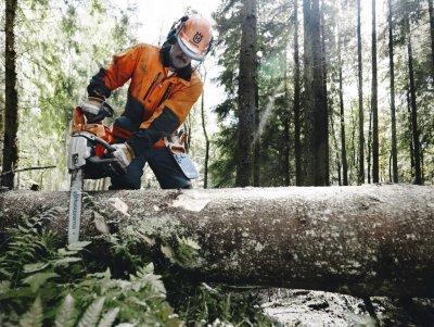 В Белокалитвинском районе задержали мужчину, который хотел спилить деревья на дрова