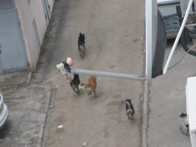 Стаи бездомных собак держат в страхе жителей одного из районов Ростова