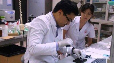 Японские генетики вырастили поджелудочную железу мыши в теле крысы