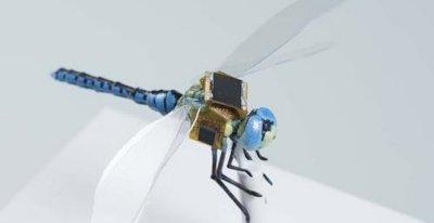 Киборги идут: специалисты из Массачусетса создали киберстрекозу