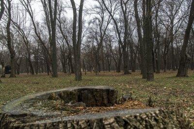 На благоустройство городских парков Ростовская область получит 24,9 млн рублей