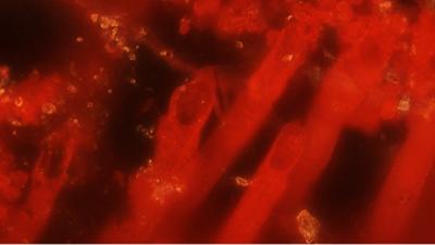 Геологи нашли в Канаде древнейшие следы жизни на Земле