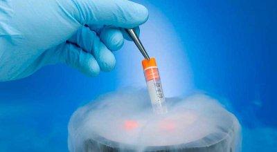 Американские ученые впервые успешно заморозили и разморозили органы