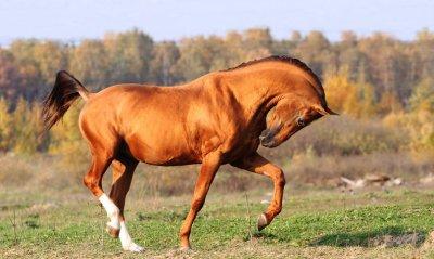 В Белокалитвинском районе украли лошадей