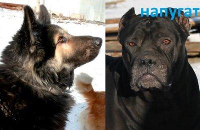 Ветер сорвал ворота — пропали 2 собаки в г. Шахты