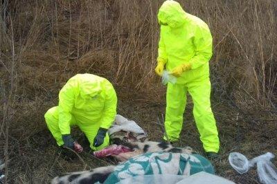 Под Ростовом нашли захоронение с тушами свиней
