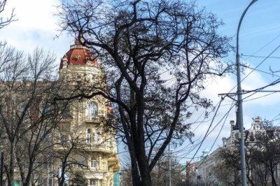 в начале апреля в Ростове высадят новые деревья