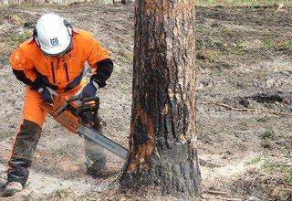 Город Шахты потратит 2,5 млн на спил деревьев