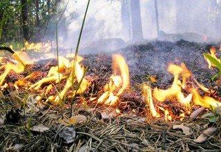 Установили видеокамеры в лесах Дона — объявлен пожароопасный период