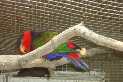 В ростовском зоопарке украли двух попугаев ара