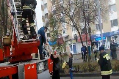 Пожарные в Ростове спасли домашнего кота, просидевшего на дереве три дня