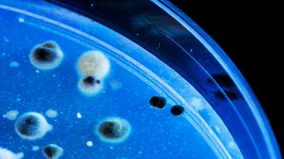 Создан препарат, заставляющий опасные бактерии разрушать собственную ДНК
