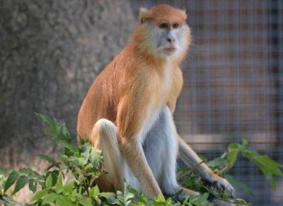 В ростовском зоопарке животные переехали в летние вольеры
