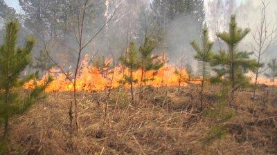 В Белокалитвинском районе участились пожары