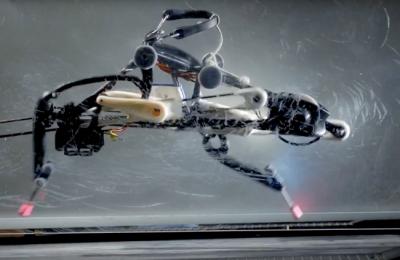 Робот-страус умеет бегать без помощи датчиков и камер с компьютером