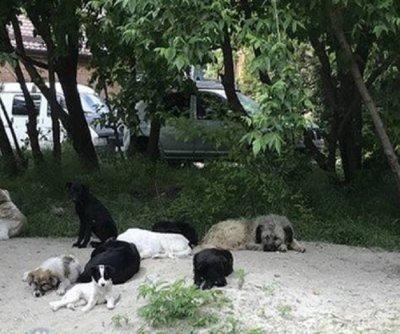 Свора бродячих собак в районе Текучевского моста бросается на прохожих и велосипедистов