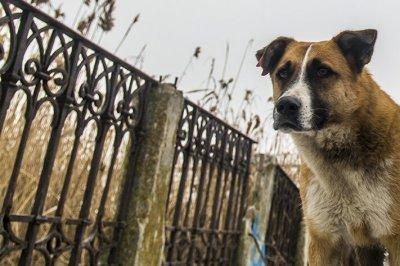 В Ростове свора бродячих собак набросилась на двух женщин