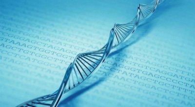 Составлена самая полная карта ДНК человека