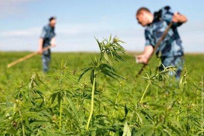 Дончанин за незаконное приобретение и хранение наркотических средств в крупном размере осужден на  3,5 года