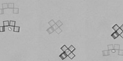 Микроботы-оригами изловили дрожжевую клетку