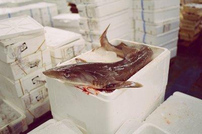 Выявлены нарушения в сфере хранения и реализации продукции животного происхождения (рыбы и рыбной продукции)