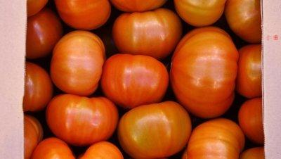 Турция ждет отмены запрета на импорт томатов в Россию в ближайшие месяцы