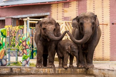 В Ростове на глазах у зрителей будут кормить слонов и пеликанов