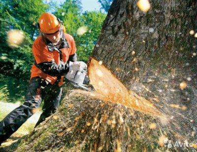 Ответственность за незаконную рубку деревьев
