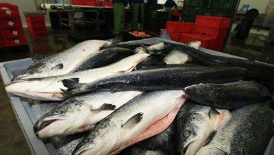 Россельхознадзор ограничил ввоз рыбы с двух белорусских предприятий