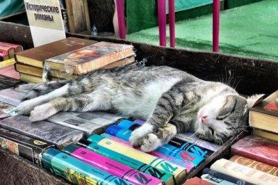 Книжный развал возле Публички снова хотят ликвидировать